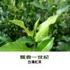 飄香一世紀.台灣紅茶