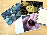 橫式明信片
